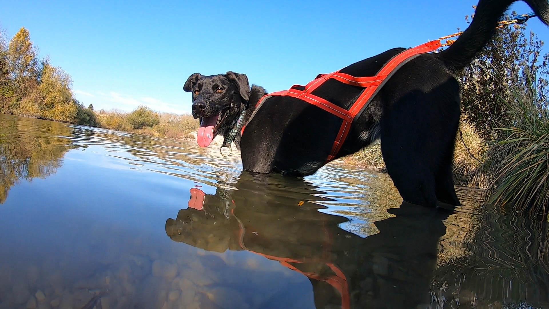 Ein Hund der in der Pause bei der Huskytrekkingtour im See steht
