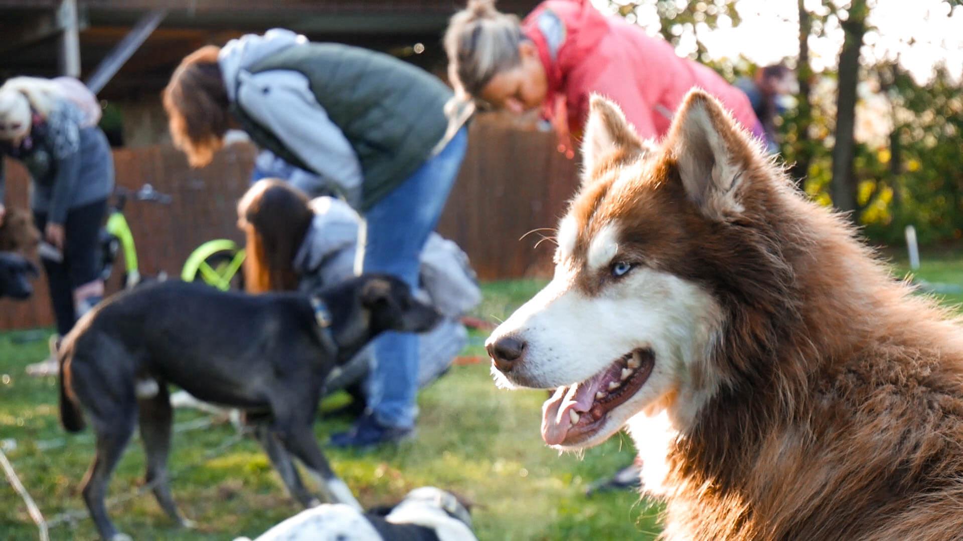 Schlittenhunde von Funday-Events