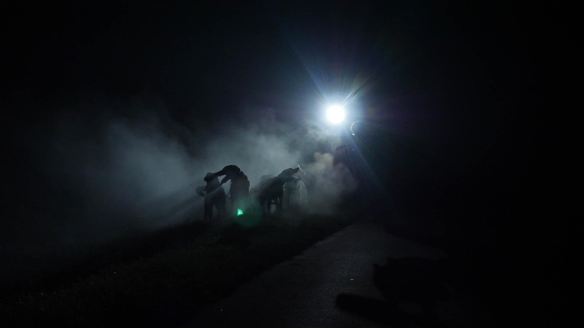 Die Schlittenhunde Nachtfahrt ging durch Nebel und Mondschein in Schwabmünchen entlang
